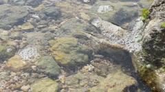 Sea flora Stock Footage