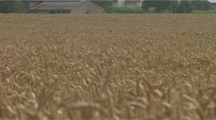 Cornfield Stock Footage
