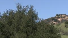 Hillside brush - pan L to R Stock Footage