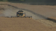 Stock Video Footage of Combine harvester at work on rapeseed.