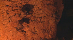 P01291 Bats on Cave Wall Stock Footage