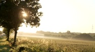 Country Road in the Morning Stock Footage
