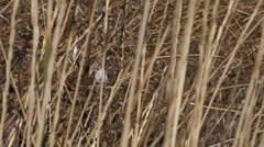 Snail in marsh reeds Stock Footage