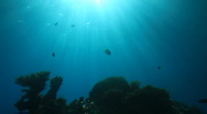 Life under water Stock Footage