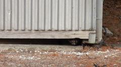 Stock Video Footage of cats crawling under door