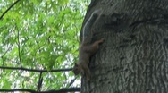 Stock Video Footage of Squirrel in Central Park, NYC