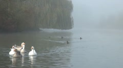 Ducks and Geese on Misty Lake Stock Footage