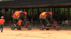 Two Elephants Riding Bicycles - stock footage