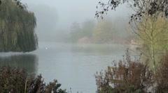 Misty Lake Scene with Birds Stock Footage