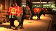 Live Elephants Dancing In A Cultural Show In Thailand Stock Footage