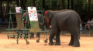 Elephant Painting A Picture In Thailand Stock Footage