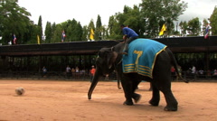 Elephants Kicking Soccer Balls At Cultural Show Stock Footage