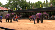 Elephants Using Hoola Hoops And Dancing Stock Footage
