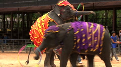Elephant Stands On Hind Legs While Hoola Hooping Stock Footage