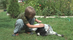 Boy and spaniel. Stock Footage