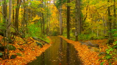 Rainy autumn road 01 Stock Footage