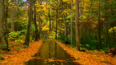 Rainy autumn road 02 Stock Footage
