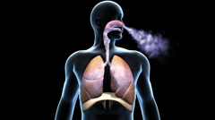 Respiratory System, Breathing Lungs with Airflow Stock Footage