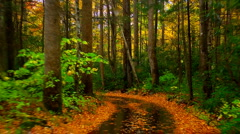 Rainy autumn road 03 Stock Footage