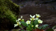 Flower by the River Stock Footage