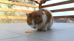 Cat and potato chips Stock Footage