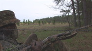 Stock Video Footage of Wild Turkey Hunting
