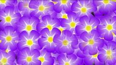 Purple wild flower violet flicker festivals bloom lush prosperous background. Stock Footage
