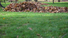 Leaf cleaner 3 HD 1080p Stock Footage