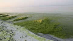 Algae and tar balls on Seagrove Beach Florida Stock Footage