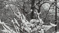 Snow Birds - stock footage