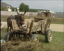 Donkey with the cart Stock Footage