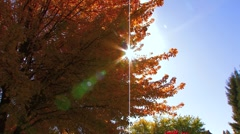 Sun light through Fall tree - stock footage