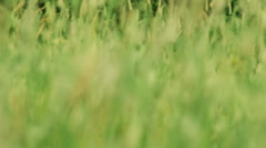 Green Spring Field Stock Footage