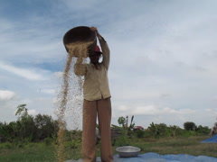 CAMBODIA-RICE HARVEST20 Stock Footage