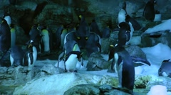 Sinister figure appears to rule penguin kingdom (center) Stock Footage