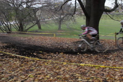 Cyclocross. Group comes around tree. SD. Stock Footage