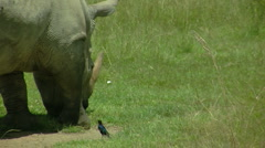 Rhino P3 Stock Footage