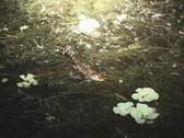 Alligator Hatchling Newborn Stock Footage