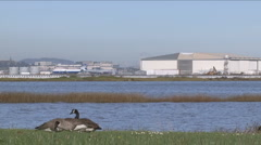 Water fowl near airport Stock Footage