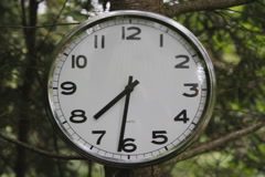 Clock in tree. Two shots. SD. Stock Footage