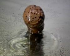 Champagne bottle cork falling slowmotion Stock Footage