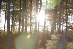 Driving. Sunny trees. SD. - stock footage