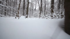 Camera run in the winter woods Stock Footage