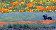 Poppy rider Stock Footage