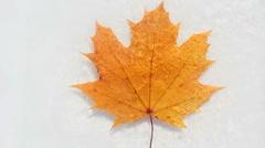 Ice Leaf Time Lapse - stock footage