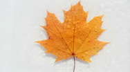 Stock Video Footage of Ice Leaf Time Lapse