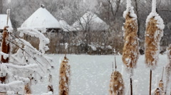 Frozen reeds and grass near the lake Stock Footage