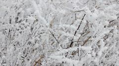 Frozen reeds and bush dancing in the wind - stock footage