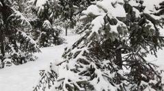 Pine tree under snow  Stock Footage