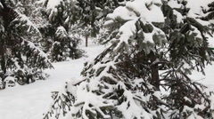 Stock Video Footage of Pine tree under snow